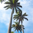 Palm trees on blue sky and white clouds — Stock Photo #25846203