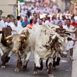 Stock Photo: PAMPLONA, SPAIN-JULY 9: Bulls running in street during SFermi