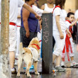 Stock Photo: PAMPLONA, SPAIN-JULY 10: dog in costume on street during SF