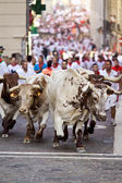 PAMPLONA, SPAIN-JULY 9: Bulls running in street during San Fermi — Stock Photo