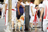 PAMPLONA, SPAIN-JULY 10: A dog in costume on street during San F — Stock Photo
