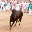 Stock Photo: PAMPLONA, SPAIN - JULY 11: People having fun with young bulls at