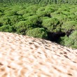 Sand dune of Bolonia beach, province Cadiz, Andalucia, Spine — Stock Photo
