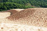 Sand dune of Bolonia beach, province Cadiz, Andalucia, Spine — Stok fotoğraf