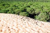 Sand dune of Bolonia beach, province Cadiz, Andalucia, Spine — Zdjęcie stockowe