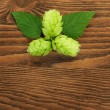 Hop plant on a wooden table — Stock Photo
