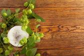Ein pint und hop-pflanze — Stockfoto