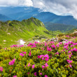 Carpathian mountains — Stock Photo #28044199