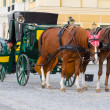 Horses for hire in Vienna - Stock Photo