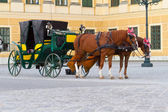 Paarden huur in wenen — Stockfoto
