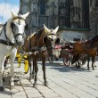 Stock Photo: Horse-drawn Carriage in Vienna