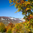 Trees in Autumn, Montenegro, Europe — Stock Photo