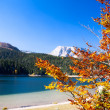 Autumn tree in Durmitor National Park, Montenegro — Stock Photo