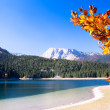 Lake with autumn tree in Durmitor National Park, Montenegro — Stock Photo #15362923