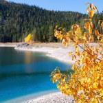 bir dağ gölü sonbahar ağacı — Stok fotoğraf #15363439