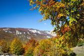 Trees in Autumn, Montenegro, Europe — Stock Photo