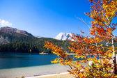 Autumn tree in Durmitor National Park, Montenegro — Stock Photo