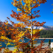 Autumn in Durmitor National Park — Stock Photo
