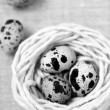 Three quail eggs in the nest with the thread - Stock Photo