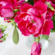 Bouquet of pink roses in a glass vase on a white background — Stock Photo