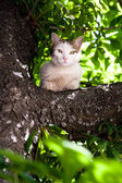 White cat with green eyes sitting in a tree — Stock Photo