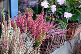 Baskets of colorful flowers on the windowsill — Stock Photo