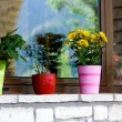 Stock Photo: Multi-colored flower pots on windowsill