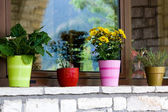 Multi-colored flower pots on the windowsill — Stock Photo