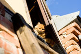 Orange cat hiding in the attic on a sunny day — Stock Photo