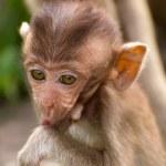 The Monkey Baby — Stock Photo