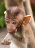 The Monkey Baby — Stock Photo