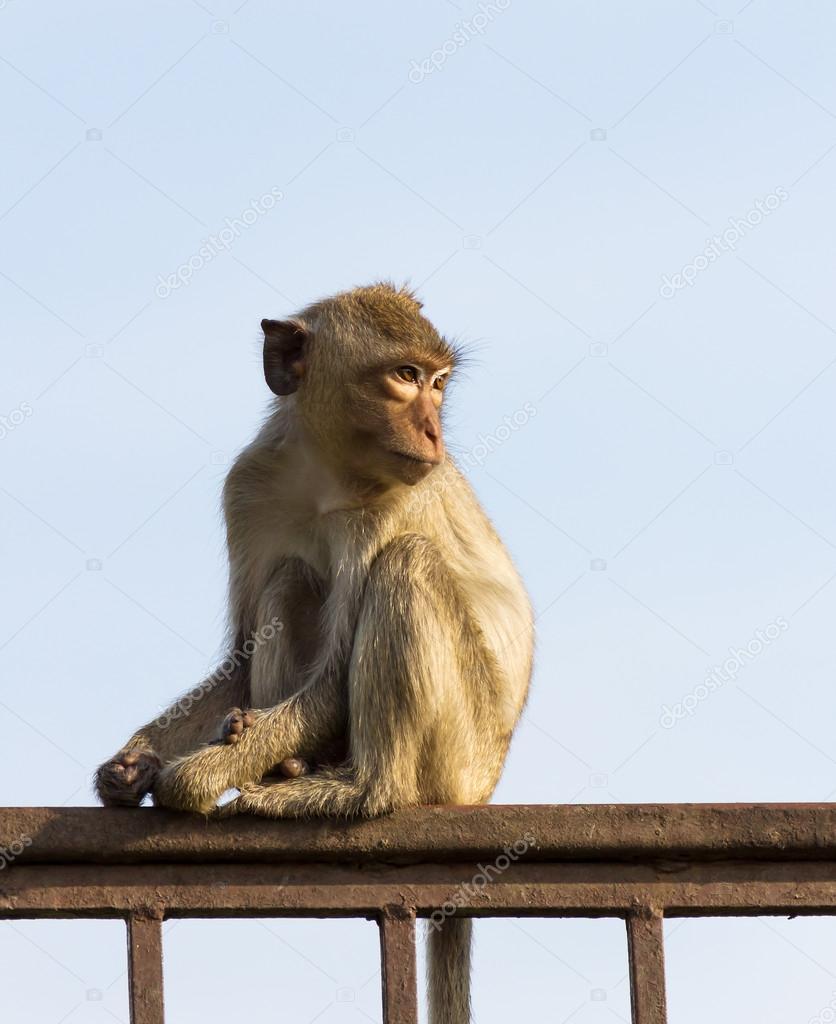 泰国动物园的笼子里的猴子