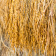 Dry paddy rice — Stock Photo