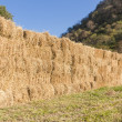 Field with bales of hay - Stock Photo