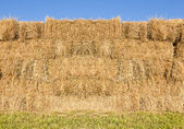 Field with bales of hay — Stock Photo