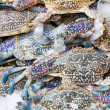 Blue crab - Stock Photo