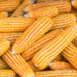 Yellow dried corns — Stock Photo