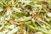 Fresh husk corn — Stock Photo