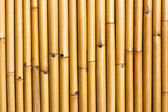 Wall of bamboo — Stock Photo