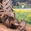 Tractor in flower garden — Stock Photo