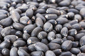 Jatropha curcas seeds — Stock Photo