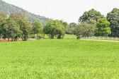 Campo di erba verde — Foto Stock