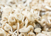 Mushrooms in farm — Stock Photo