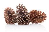 Dry pine cones on white background — Stock Photo