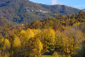 Autumn trees in sunbeams, an autumn landscape — Стоковое фото