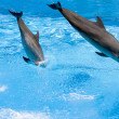 Two dolphin s  jumping out of water — Stock Photo