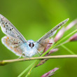 Butterfly on the stem of an ear — Stock Photo