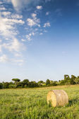 Bale of hay in a cultivated field — Stock Photo