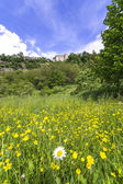 Flowery meadow at the foot of the Castle of Lerma — Stock Photo