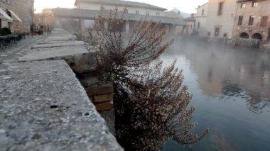 Dead plant near water in morning mist — Stock Video